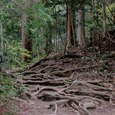 鞍馬の木の根の道
