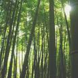 竹林の静宮
