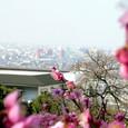 梅の向こうにかすむ大阪