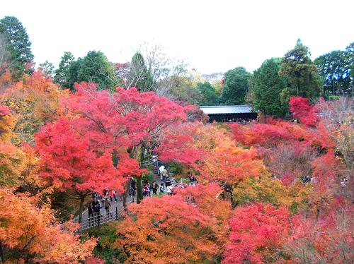 東福寺・通天橋からの眺め