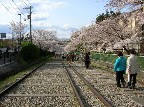 インクラインの桜Ⅱ